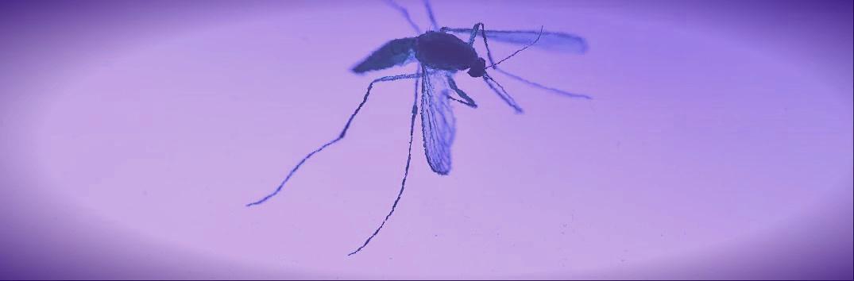 Le virus Zika: une épidémie pas encore éradiquée